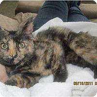 Adopt A Pet :: Samantha - Sterling Hgts, MI