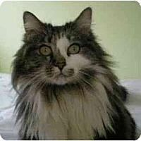 Adopt A Pet :: Dee Dee - Portland, OR