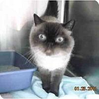 Adopt A Pet :: Blue - Riverside, RI