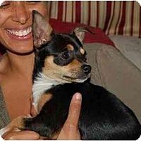 Adopt A Pet :: Jo Jo Dancer - Chula Vista, CA