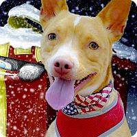 Adopt A Pet :: Ronan cutie boy - Sacramento, CA