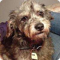 Adopt A Pet :: HIGGINS - Irvine, CA