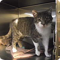 Adopt A Pet :: Alice - Chambersburg, PA