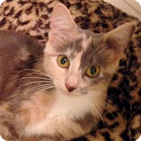 Adopt A Pet :: Annabelle - Alvin, TX