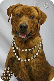 Plott Hound Mix Dog for adoption in Newnan City, Georgia - Tuck
