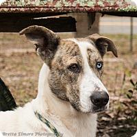 Adopt A Pet :: Jessie - Daleville, AL