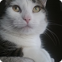 Adopt A Pet :: Jenny - Frankfort, IL