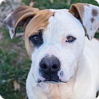 Adopt A Pet :: Dave - Lincolnton, NC