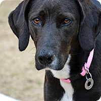 Adopt A Pet :: Mary Jane (MJ) - Hagerstown, MD