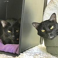 Adopt A Pet :: Pippin & Poe - Whitehall, PA