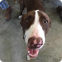 Adopt A Pet :: Wall-E - Chambersburg, PA