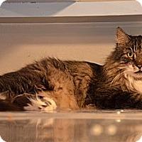 Adopt A Pet :: Machu - Deerfield Beach, FL
