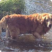 Adopt A Pet :: Ruby - Denver, CO