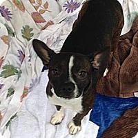 Adopt A Pet :: Pugsley - Lawrenceville, GA