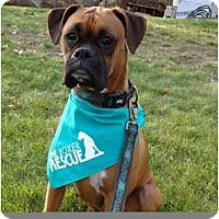 Adopt A Pet :: Jamie - Grafton, MA