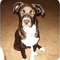 Adopt A Pet :: Sugar Ray - Douglasville, GA