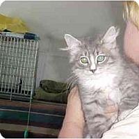 Adopt A Pet :: Dutch & Tammy - Quincy, MA