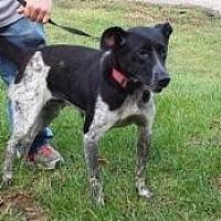 Adopt A Pet :: mags - Prestonsburg, KY