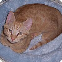Adopt A Pet :: Sacha - Richmond, VA