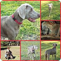 Adopt A Pet :: RANGER - Inverness, FL