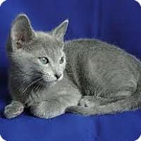 Adopt A Pet :: Luke (& Mina) - Arlington, VA