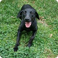 Adopt A Pet :: Ebony - Lufkin, TX