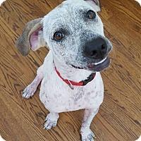 Adopt A Pet :: Aurora - Westminster, MD