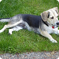 Adopt A Pet :: Sasha - Adoption Pending - Gig Harbor, WA