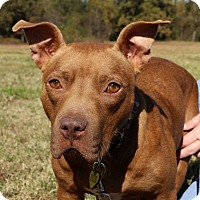 Adopt A Pet :: Zoey Grace~meet me! - Glastonbury, CT