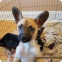 Adopt A Pet :: AGNES - Chicago, IL