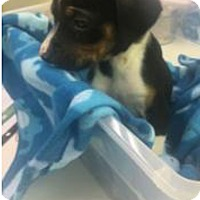 Adopt A Pet :: Tommy - Patterson, NY