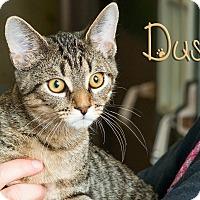 Adopt A Pet :: Dusk - Somerset, PA
