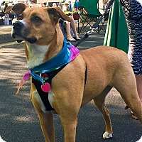 Adopt A Pet :: Roxie - Alpharetta, GA