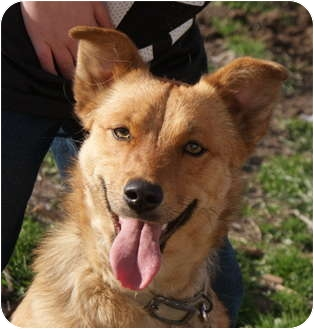 Golden Retriever Mix Dog for adoption in Glenpool, Oklahoma - Aspen