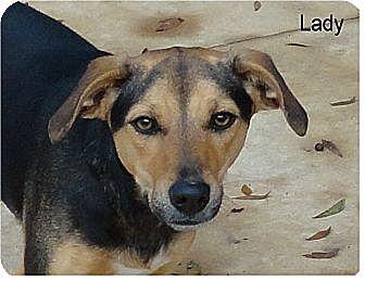Hound (Unknown Type)/Terrier (Unknown Type, Medium) Mix Dog for adoption in Ozark, Alabama - Lady (Mayhem)