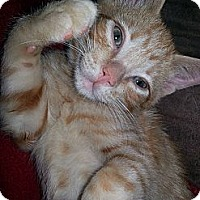 Adopt A Pet :: McNugget - Clearfield, UT