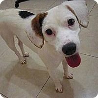 Adopt A Pet :: MIGO - Temple City, CA