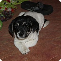Adopt A Pet :: Asher - PENDING, in Maine - kennebunkport, ME