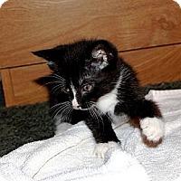 Adopt A Pet :: Cricket - Nolensville, TN