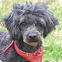 Adopt A Pet :: Grady - Mocksville, NC