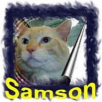 Adopt A Pet :: Samson - Jacksonville, FL