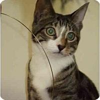 Adopt A Pet :: Lana - Fort Lauderdale, FL