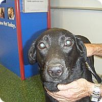 Adopt A Pet :: Denny - Mansfield, TX