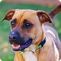 Adopt A Pet :: Ranger - Houston, TX