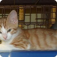 Adopt A Pet :: RAINIER - Acme, PA