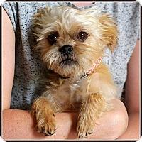 Adopt A Pet :: MIGHTY MOUSE-ADOPTION PENDING - Seymour, MO