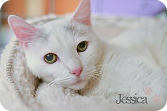 Domestic Shorthair Cat for adoption in West Des Moines, Iowa - Jessica