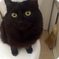 Adopt A Pet :: Minie - Lancaster, CA