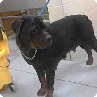 Adopt A Pet :: SISSY - Conroe, TX