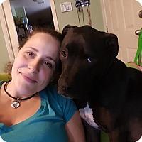 Adopt A Pet :: Bowzer - Austin, TX